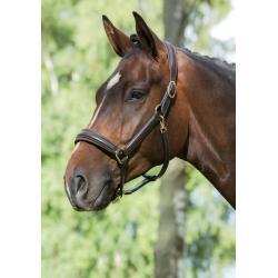 Licol en cuir - Mountain Horse